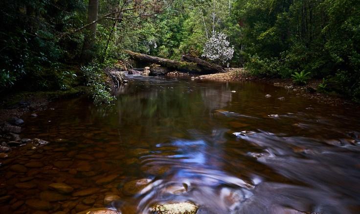Fowle Creek 1