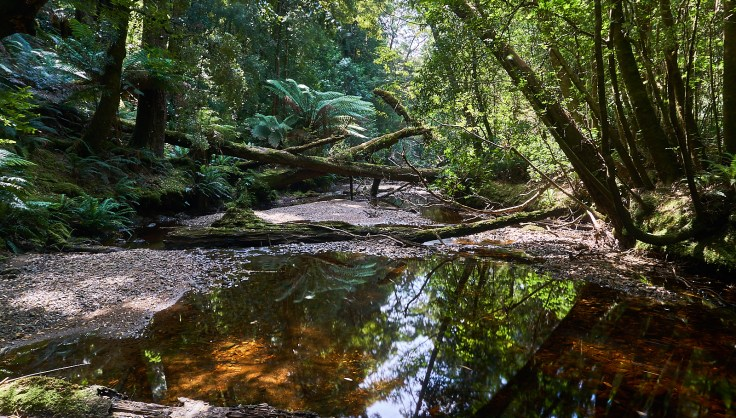 Cumberland Creek 1