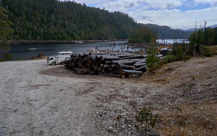 Huon Pine Logs 1