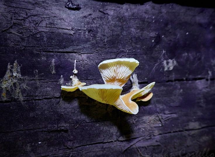 More underground fungi 1