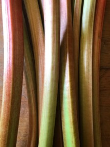 Rhubarb - pink and green and fresh