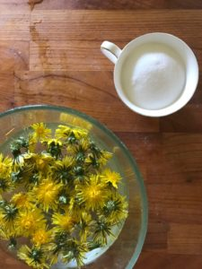 Soaking dandelion flowers
