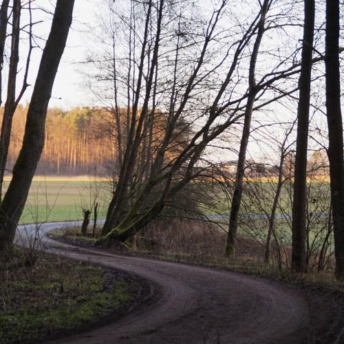 Winterspaziergang im Wald im Dezember Tasteboykott