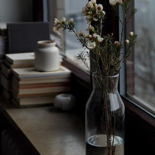 Frühling vom Markt: Wachsblumen