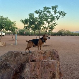 Stitch in TX. We called this picture his Lion King pose.