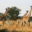 Serengeti, Tanzania 2012© Credit: Krystal M. Hauserman @MsTravelicious