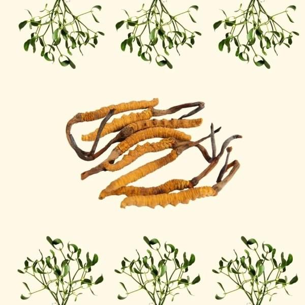 Cordyceps & mistletoe capsules 3