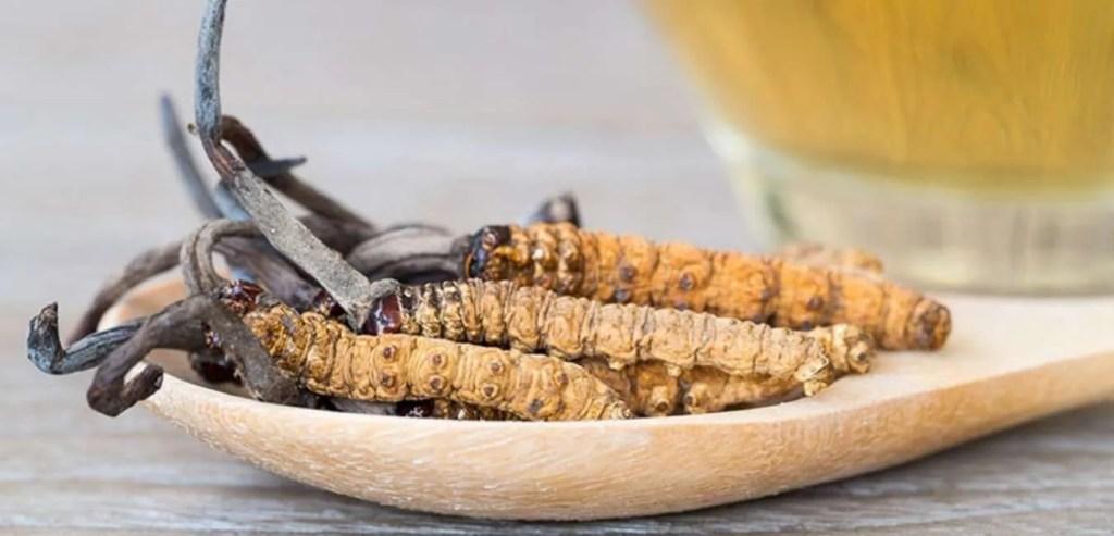 Meet the bhutan Wild Cordyceps sinensis
