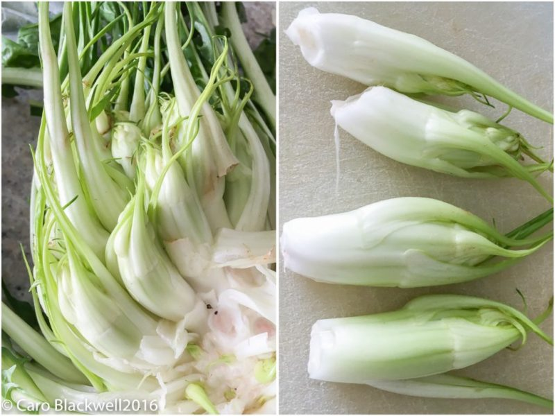 Showing the small bulbs inside the Puntarelle