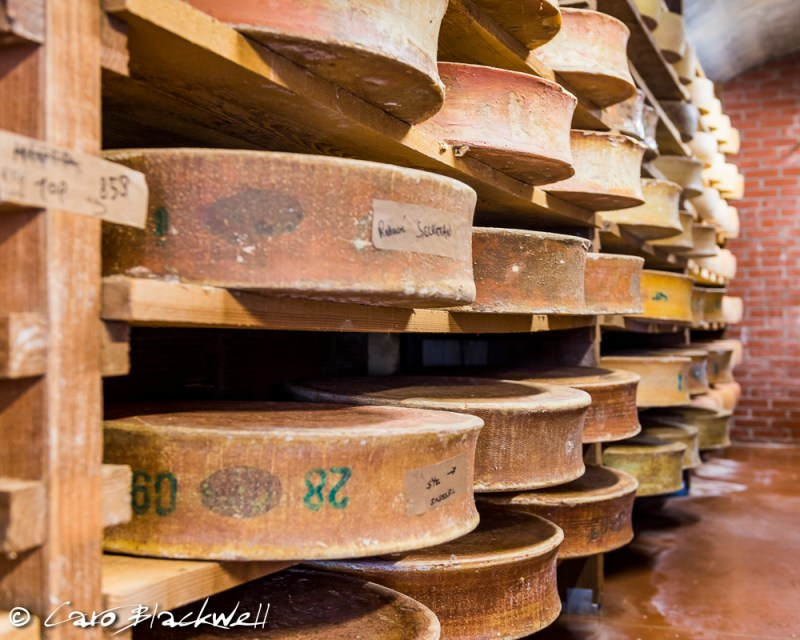 Beaufort cheese maturing in the cellar