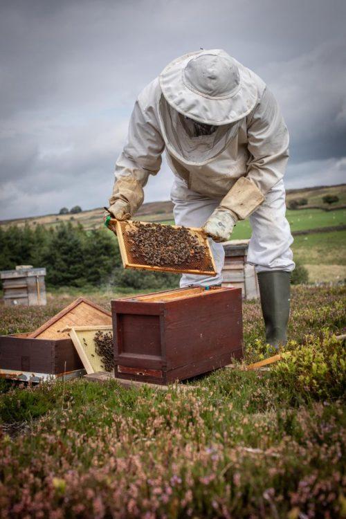 Westfields Honey © Polly Baldwin