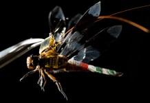 dragonfleye - insekt dron