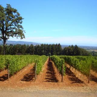 Farming Comes First at Durant Vineyards