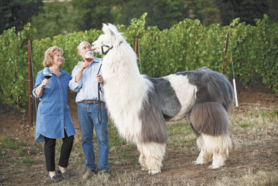 Rain Dance Vineyards Llama and Wine