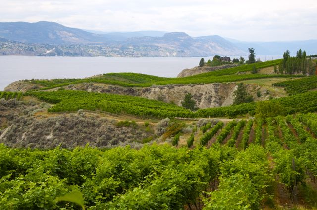 What's New in Naramata Wine Country