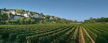 Loire Vineyards
