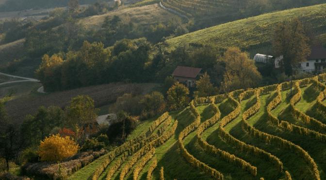 Grossmann Film and Wine Festival – Ljutomer, Eastern Slovenia