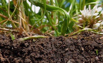 Regenerative Agriculture: A farming system fit for the 21st Century