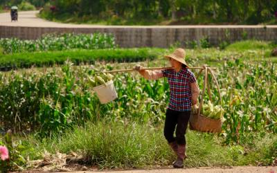 Community Supported Agriculture in China: An exciting approach that aims to restore soil and human health.