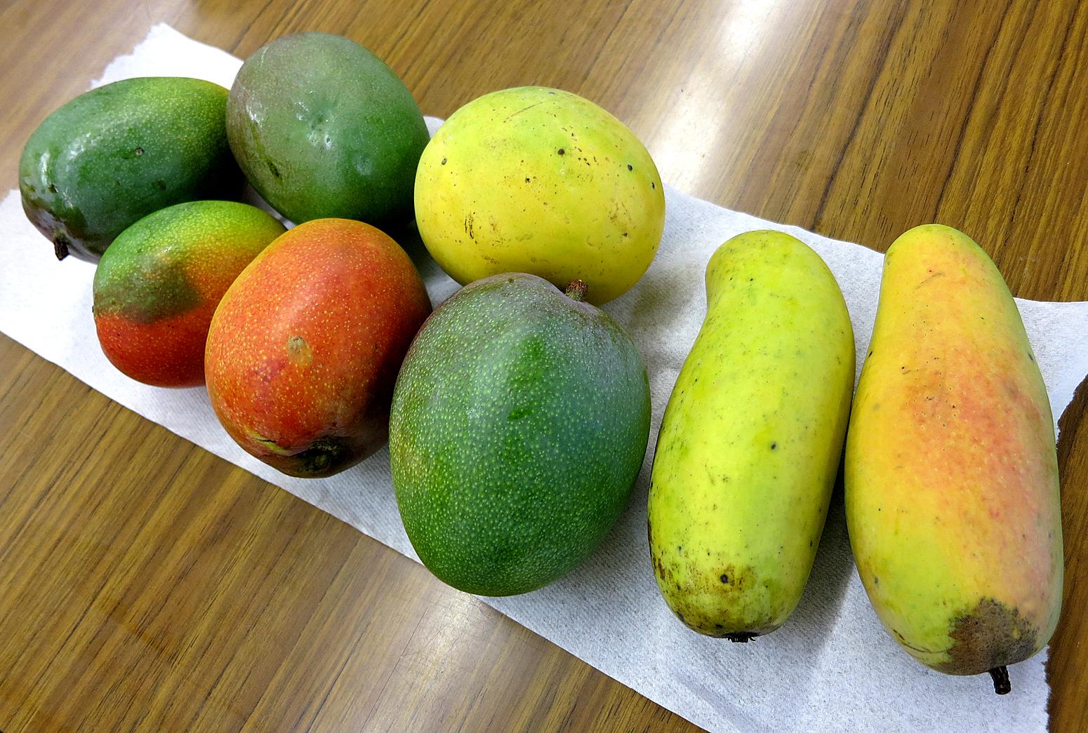 Vietnamese Mango Tasty Island