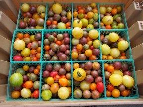 sf_farmers_market46