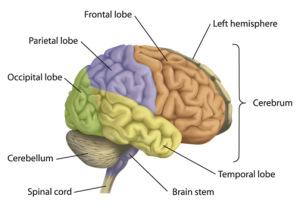 Memorization and its effect on intelligence (2/2)