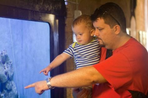 A koja je ovo riba? – kao da je pitao Luka, dok smo uživali razgledavajući akvarije s ribama iz Jadranskog mora