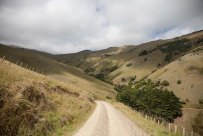 NZ_2016.01 Banks Peninsula-8433