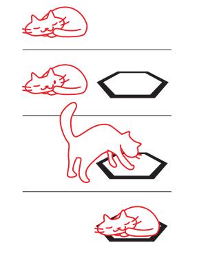 猫の習性とタタミ