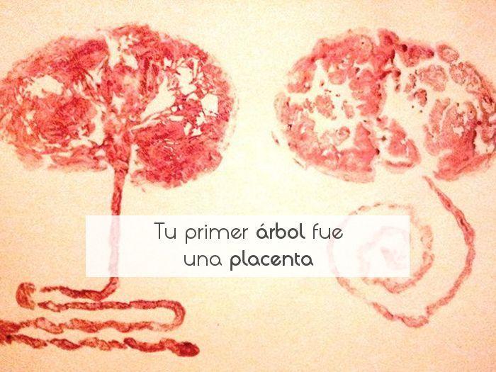 Tu primer árbol fue una placenta