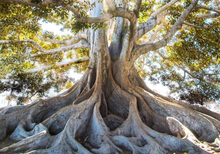 chackra raíz familia