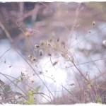 オールドレンズの沼で泳ぐ【アンジェニュー作例】