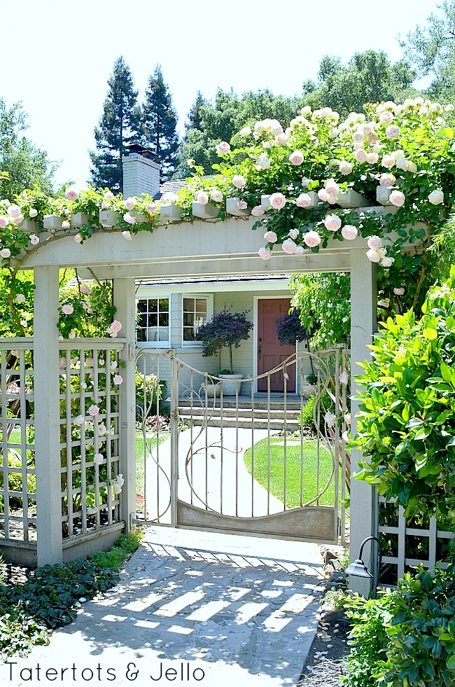 trellis front walkway and roses