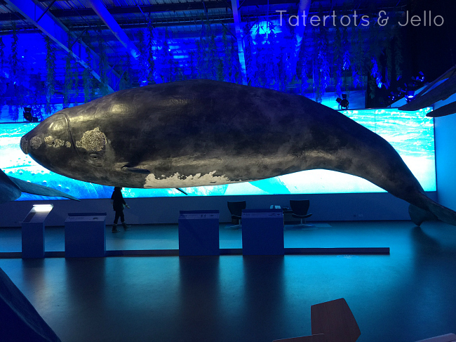 iceland whale museum