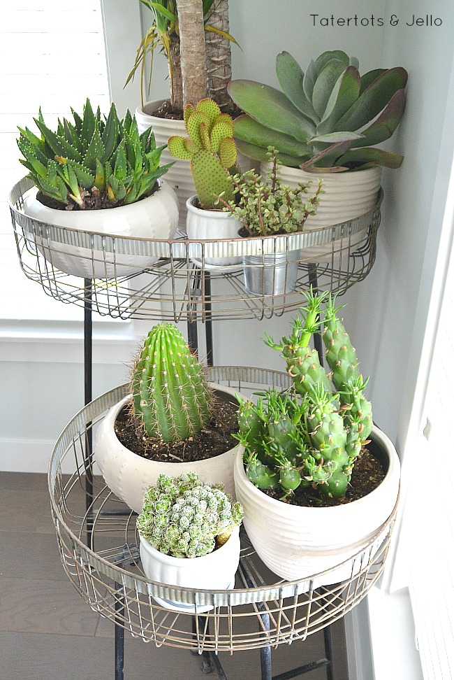 modern ways to display succulents