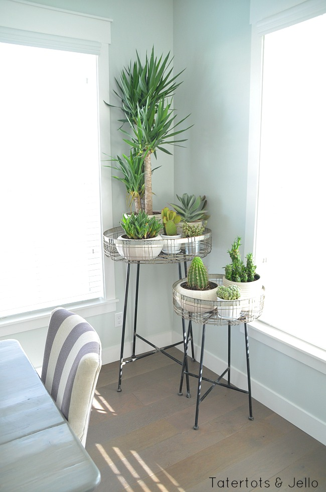 succulent modern garden display