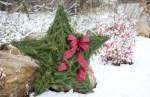 DIY Live Evergreen Christmas Star Tutorial!