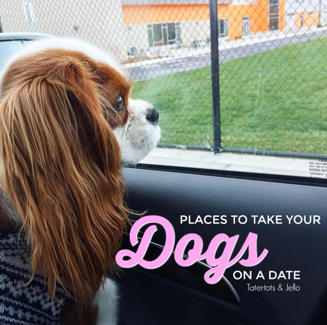 places to take your dog on a doggie date. Pet friendly restaurants.