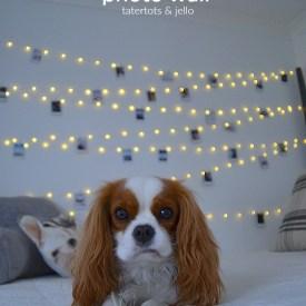 Tween/Teen Fairy Light Photo Wall