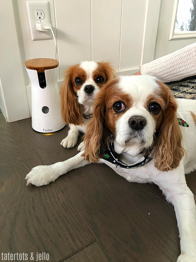 FURBO Dog Camera and Remote Feeder is the perfect gift for your favorite dog mom!