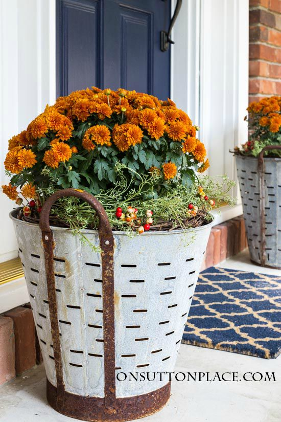 Fall Mums In Olive Buckets @ On Sutton Place