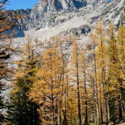 Truly beautiful here at Upper Eagle Lake, looks like a carefully manicured park, the larch are huge and full of color.
