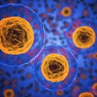 Клеточная память: её тайны и проявления