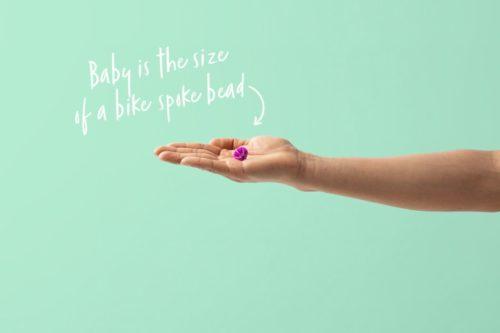 8 haftalık gebelik, 8 Haftalık Gebelik, Tatlı Bir Telaş