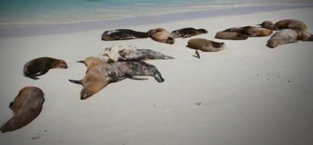dead-sea-lions-california-2yroebigz8gapac6g799my-450x209