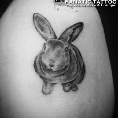 ウサギ rabbit