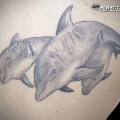 イルカ dolphin