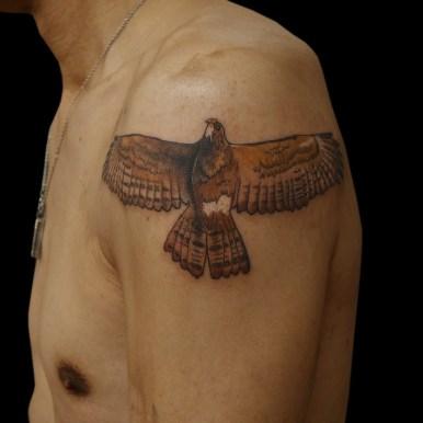 鷹 hawk falcon