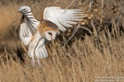 Wild Wings Environmental EducationTo foster a greater awareness of the important roles that Colorado's native birds and bats play in our environment and to promote the protection of these animals and their ecosystems.