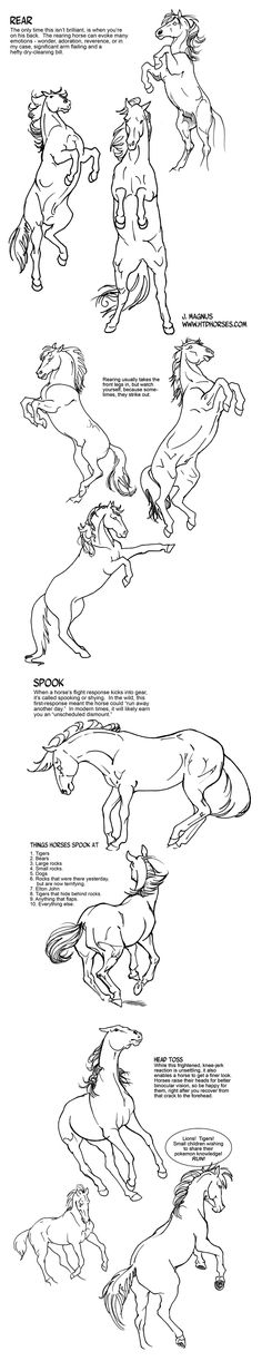 71 Best Tats Images In 2019 Horses Drawings Of Horses Ideas And Designs